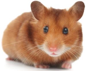 guide-du-hamster.fr